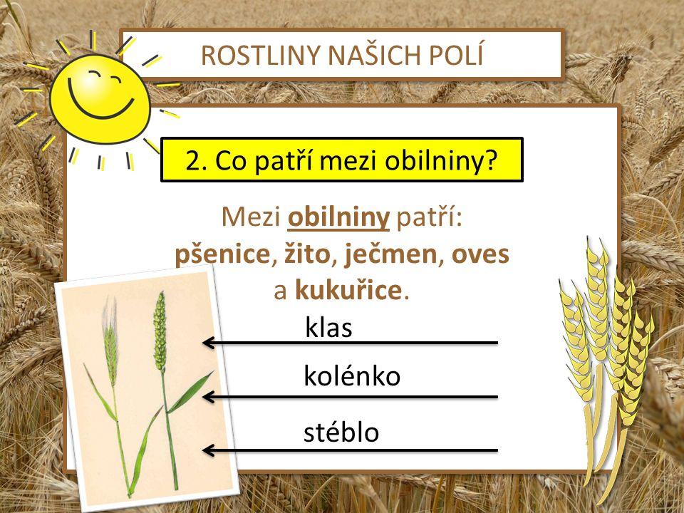 pšenice, žito, ječmen, oves