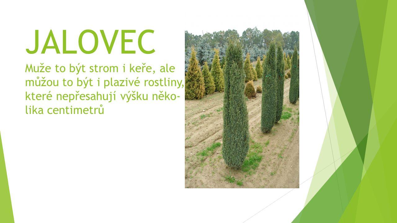 JALOVEC Muže to být strom i keře, ale můžou to být i plazivé rostliny, které nepřesahují výšku něko- lika centimetrů