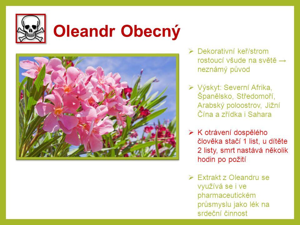Oleandr Obecný Dekorativní keř/strom rostoucí všude na světě → neznámý původ.