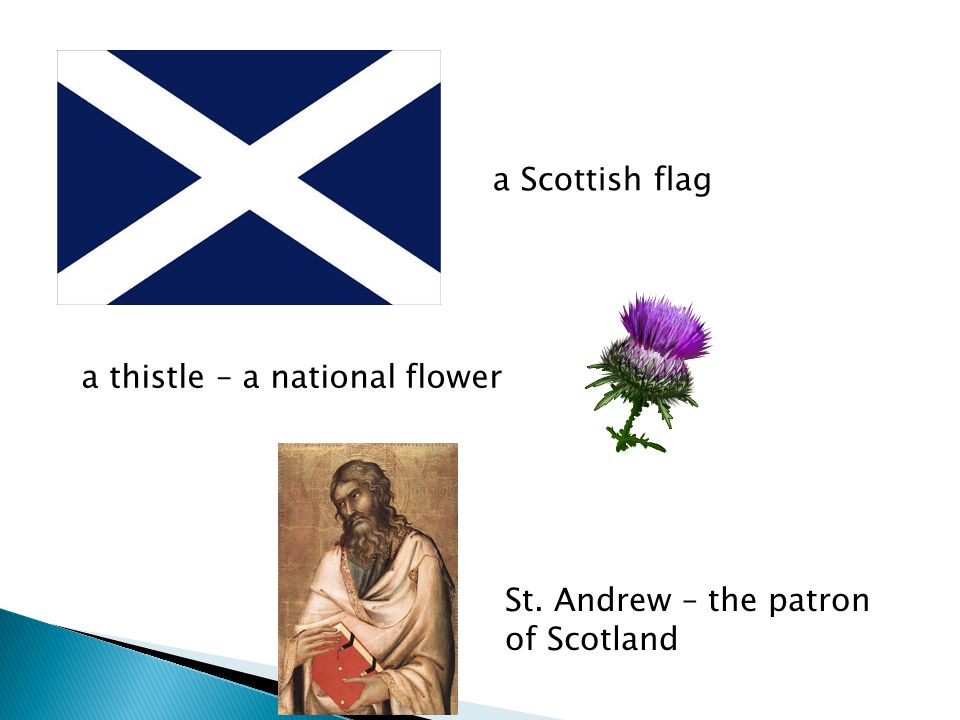 a Scottish flag a thistle – a national flower St. Andrew – the patron of Scotland