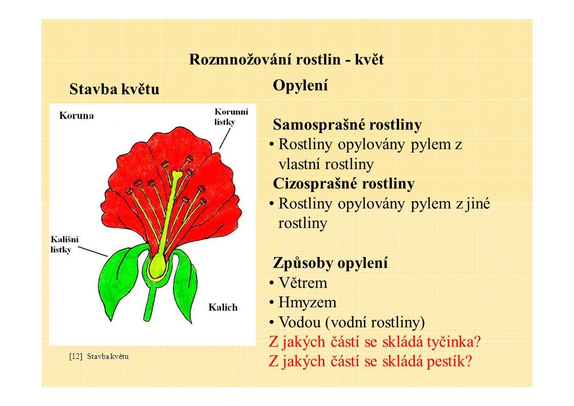 Rozmnožování rostlin - květ