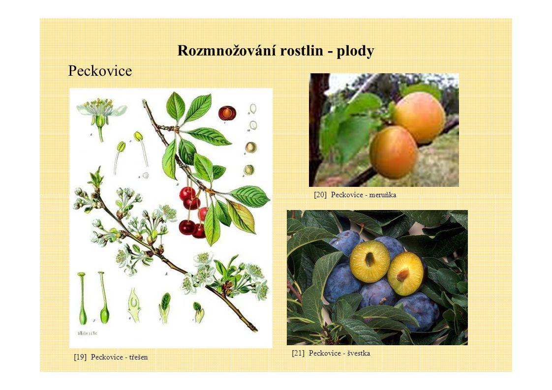 Rozmnožování rostlin - plody