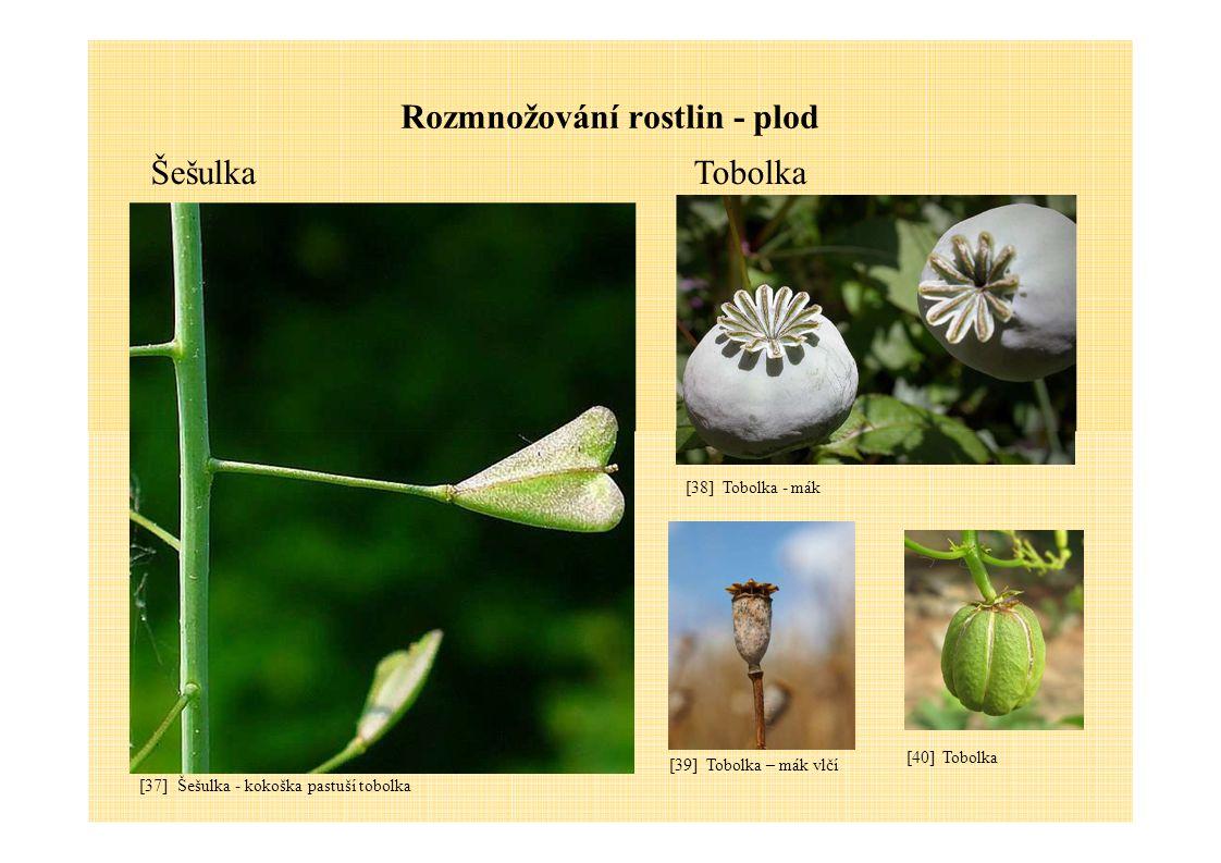Rozmnožování rostlin - plod