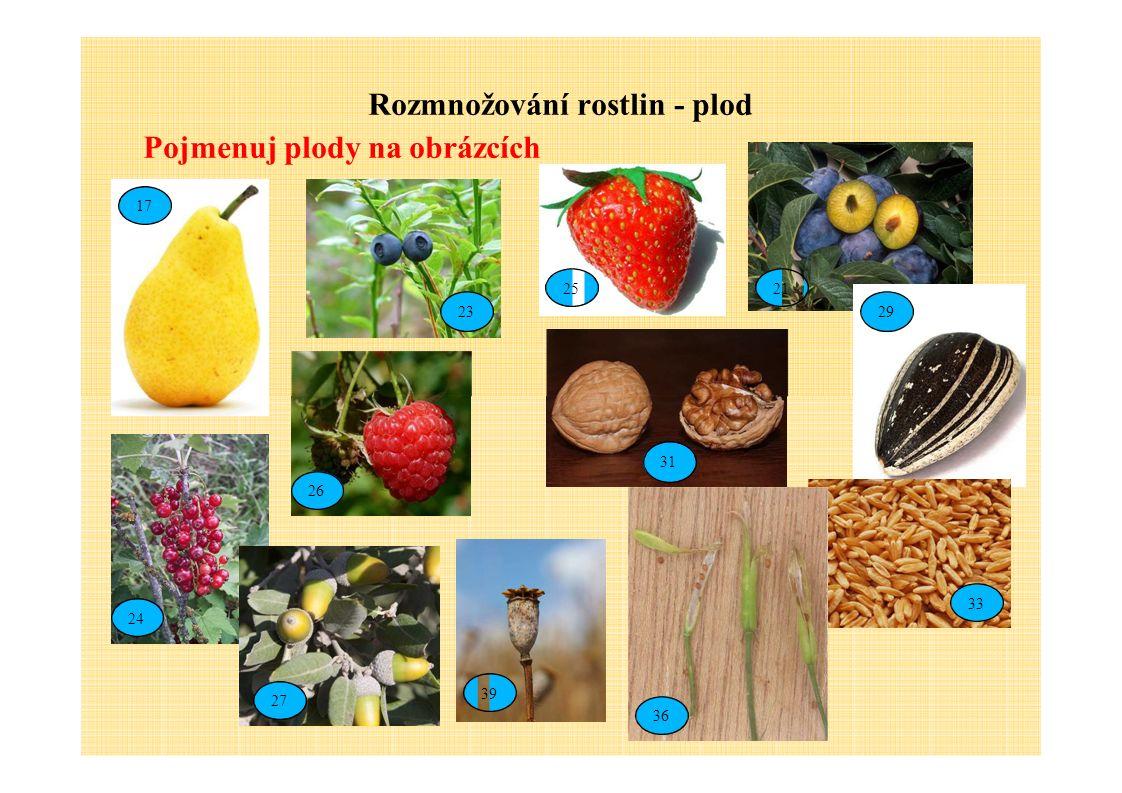 Rozmnožování rostlin - plod Pojmenuj plody na obrázcích