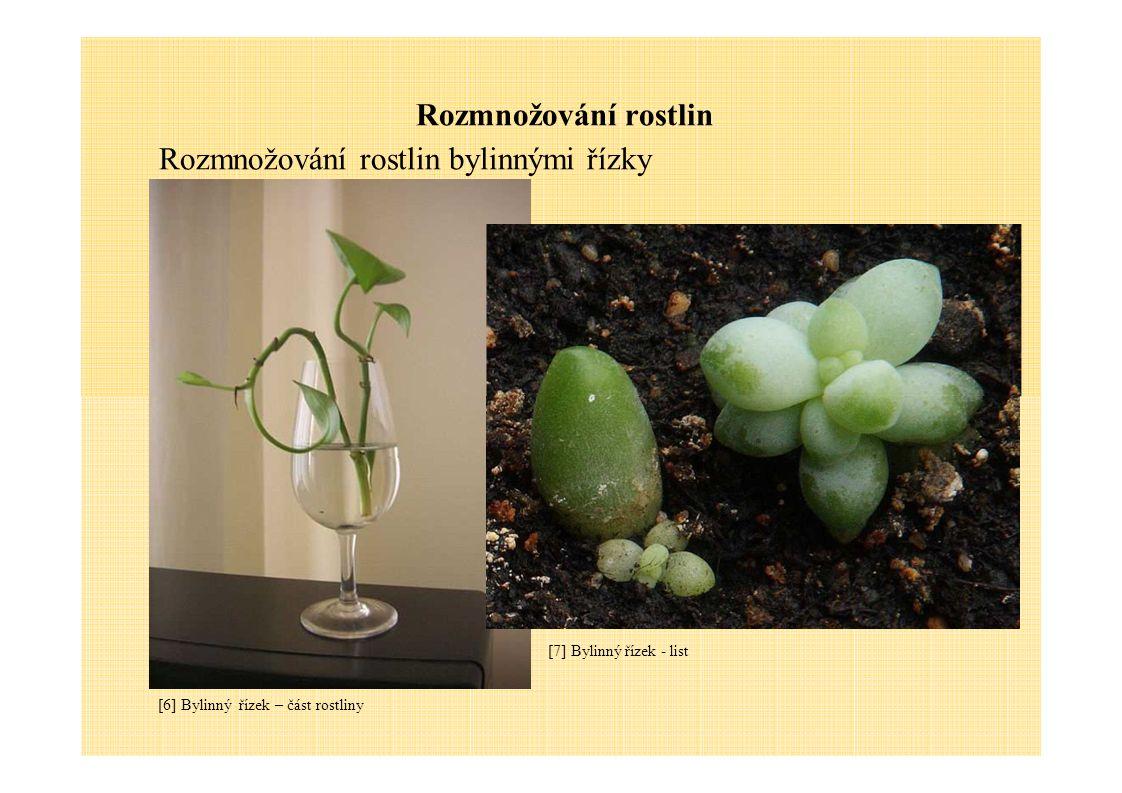 Rozmnožování rostlin Rozmnožování rostlin bylinnými řízky