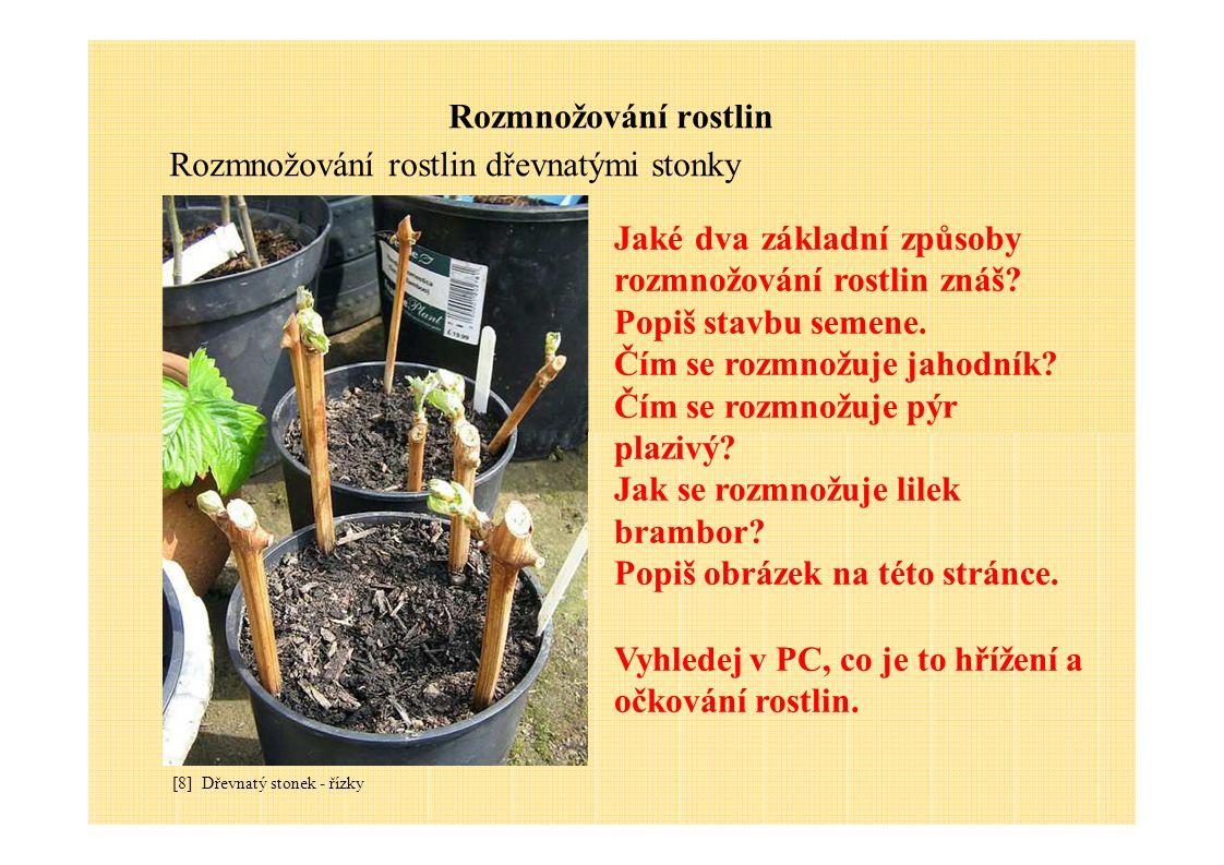 Rozmnožování rostlin Rozmnožování rostlin dřevnatými stonky