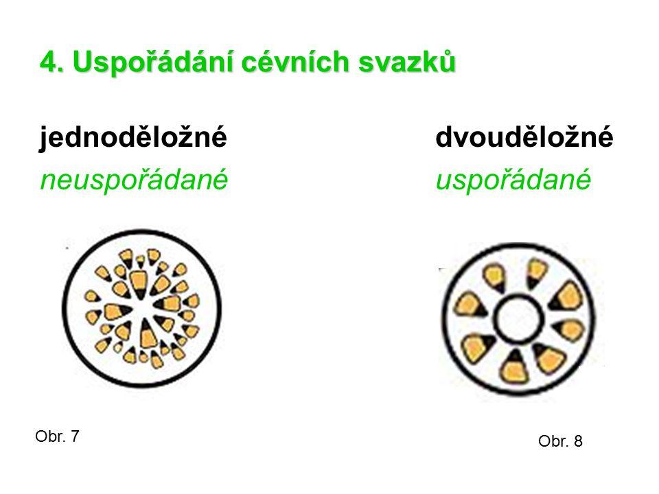 4. Uspořádání cévních svazků