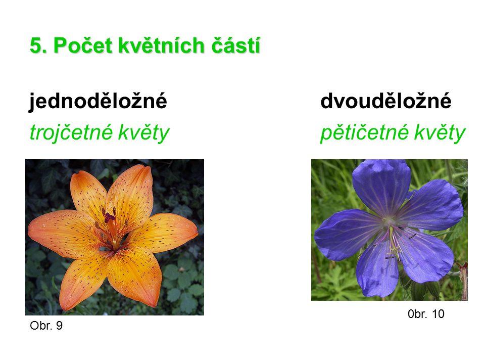 jednoděložné dvouděložné trojčetné květy pětičetné květy