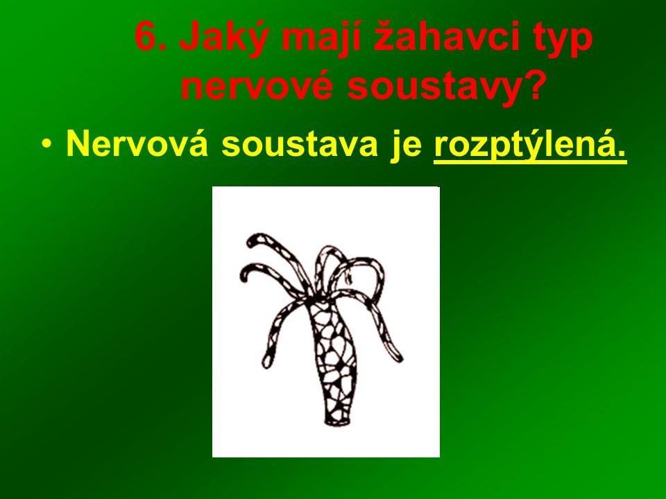 6. Jaký mají žahavci typ nervové soustavy