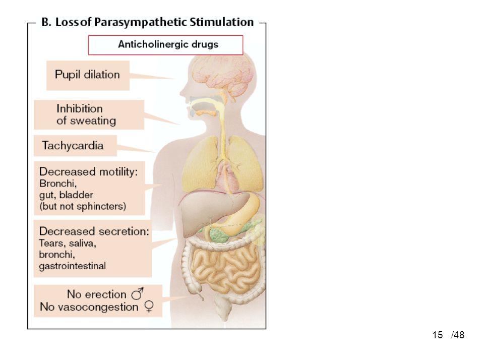 Parasympathetic /48