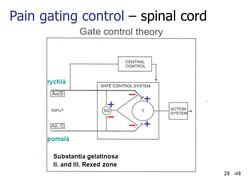 Pain gating control – spinal cord