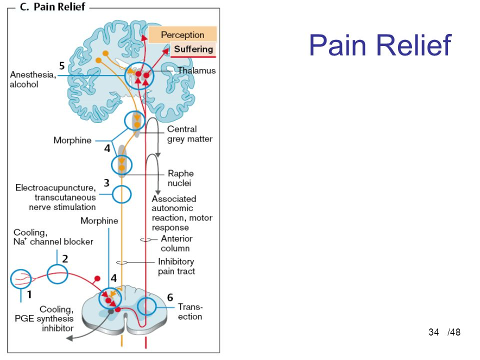 Pain Relief /48