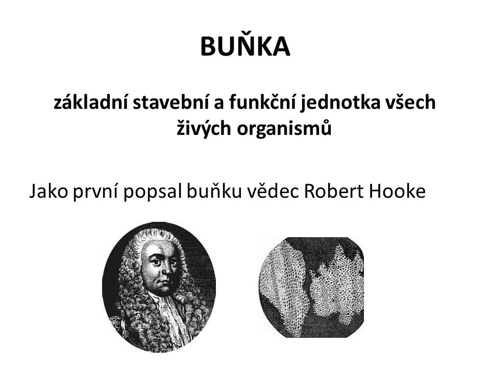 BUŇKA základní stavební a funkční jednotka všech živých organismů Jako první popsal buňku vědec Robert Hooke