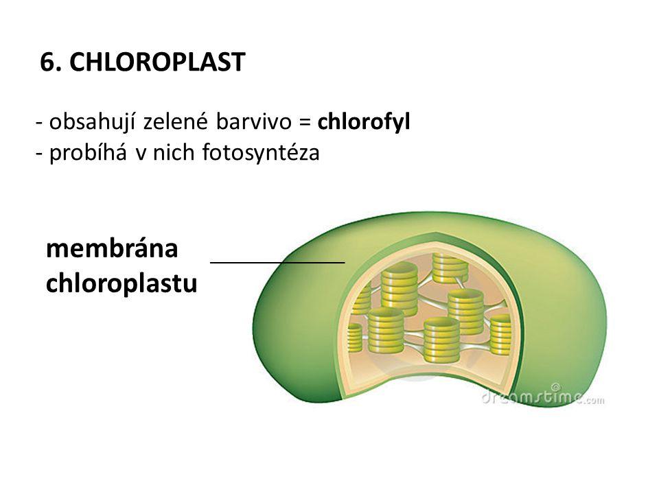 membrána chloroplastu