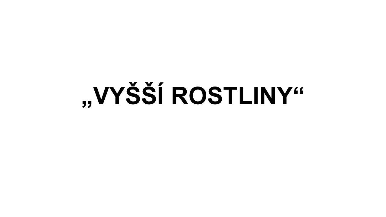 """""""VYŠŠÍ ROSTLINY"""