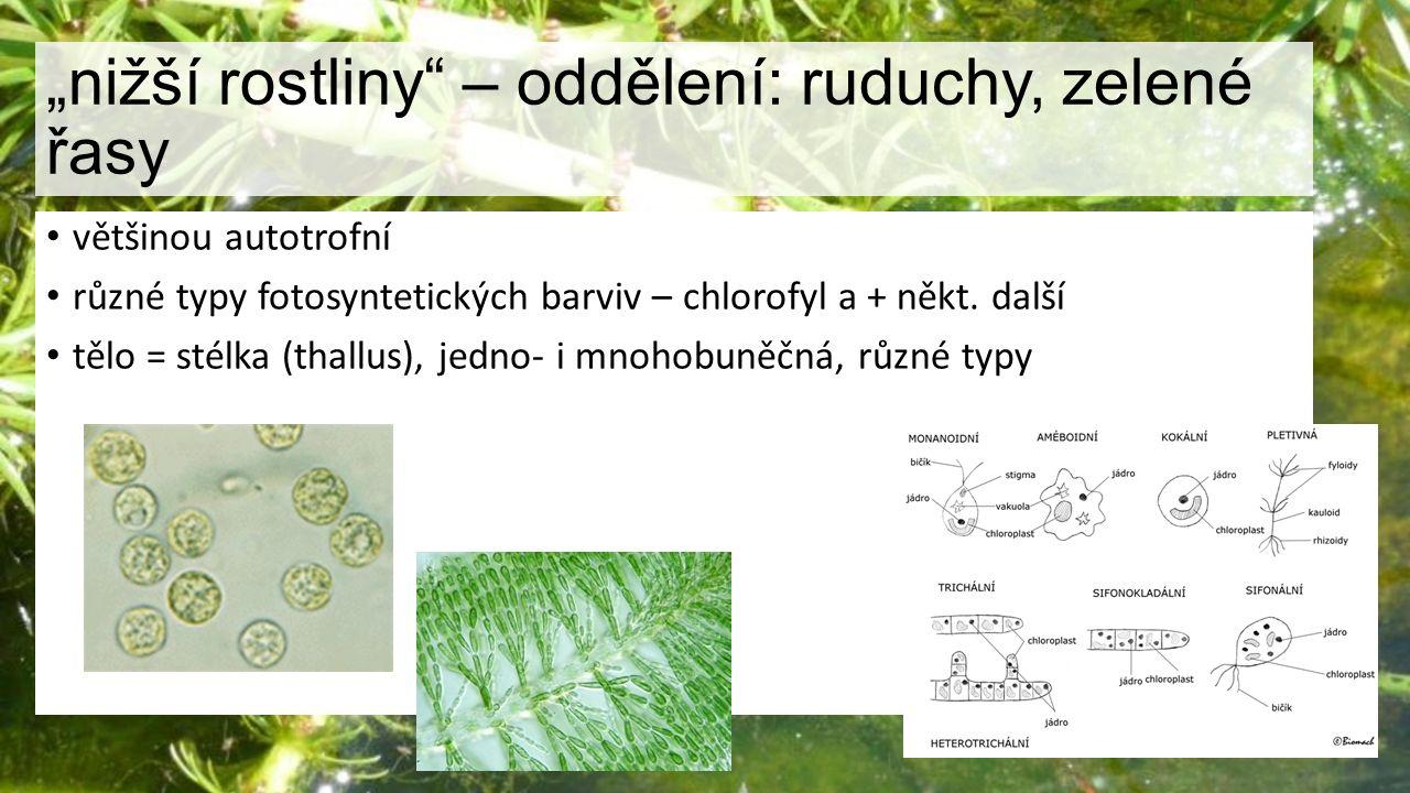 """""""nižší rostliny – oddělení: ruduchy, zelené řasy"""