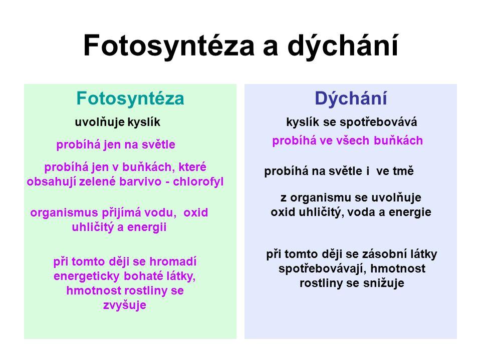 Fotosyntéza a dýchání Fotosyntéza Dýchání uvolňuje kyslík