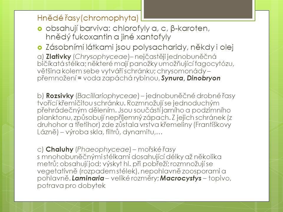 Hnědé řasy(chromophyta)