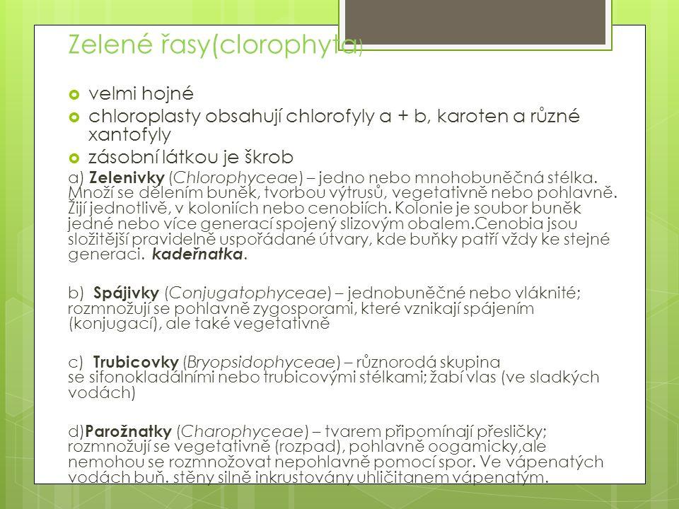Zelené řasy(clorophyta)