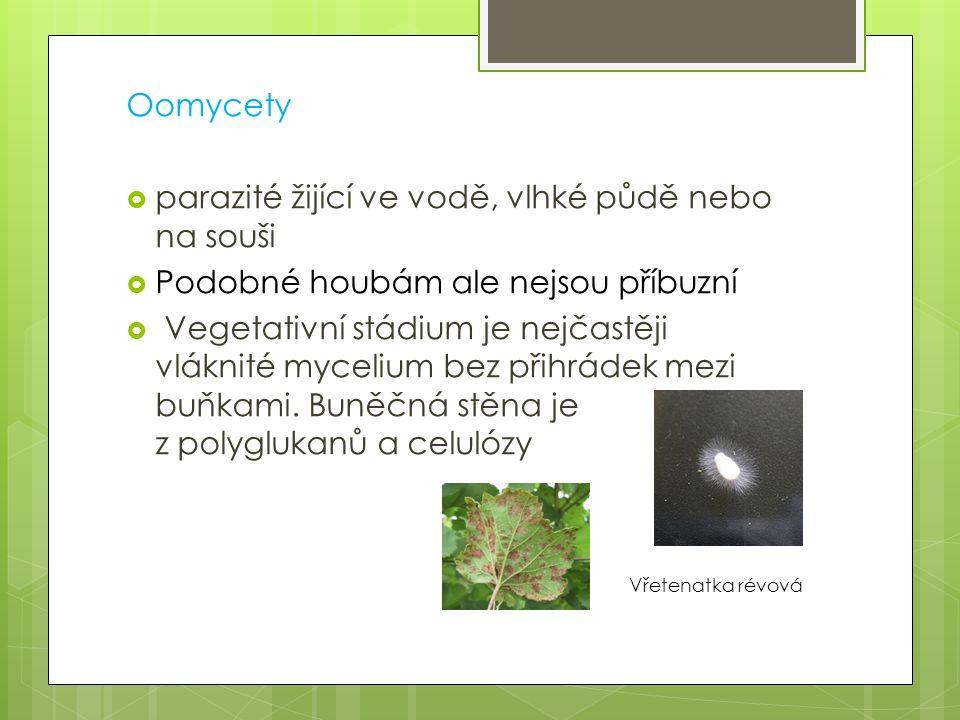 Oomycety parazité žijící ve vodě, vlhké půdě nebo na souši. Podobné houbám ale nejsou příbuzní.
