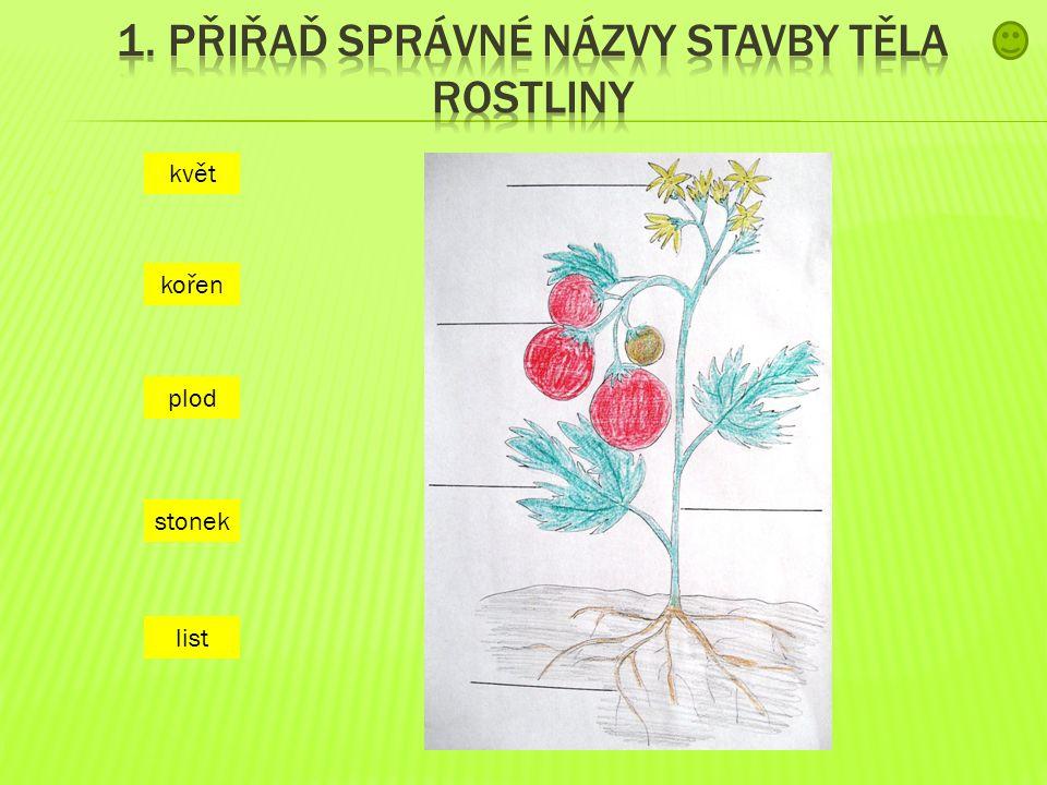 1. přiřaď správné názvy stavby těla rostliny