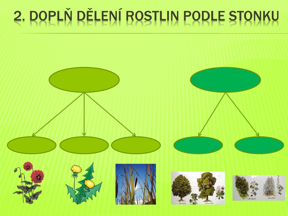 2. Doplň Dělení rostlin podle stonku
