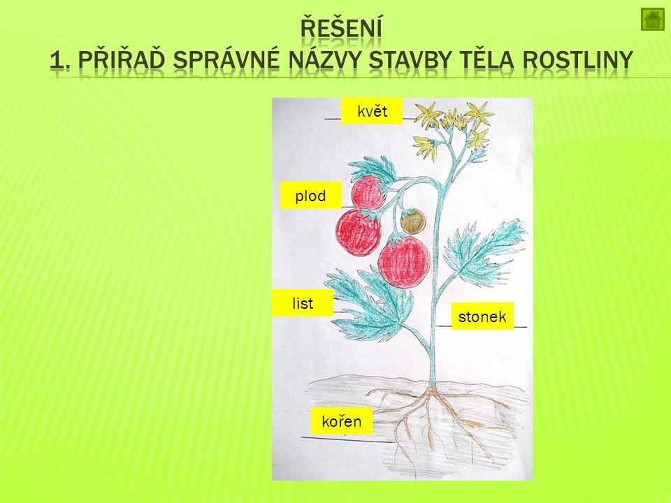 Řešení 1. přiřaď správné názvy stavby těla rostliny