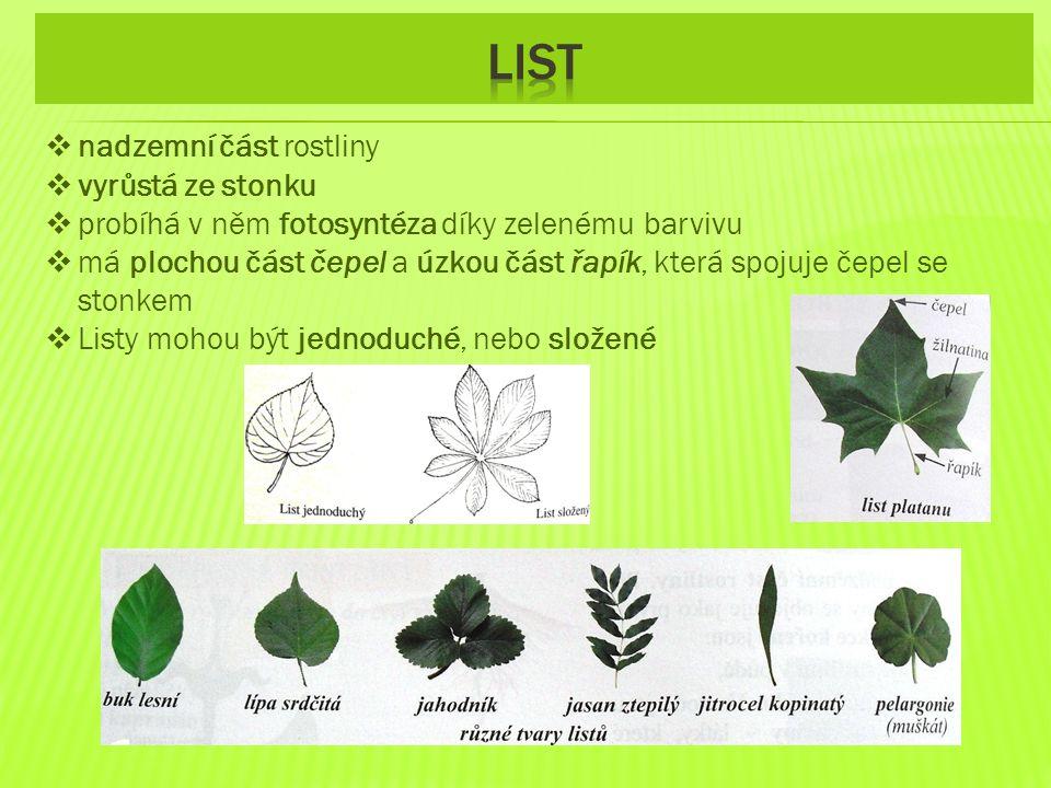 list nadzemní část rostliny vyrůstá ze stonku