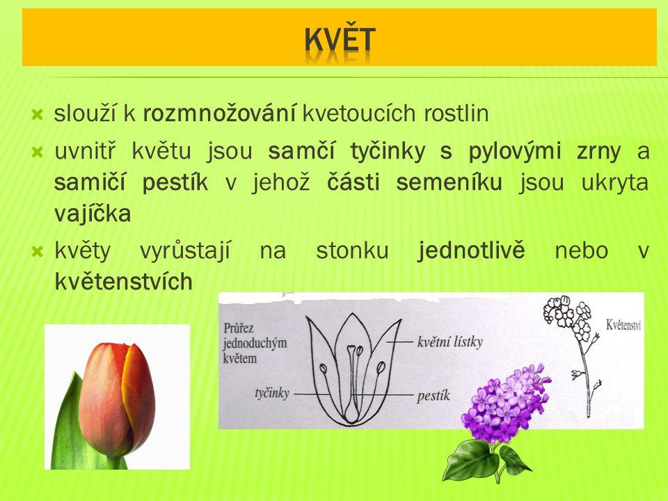 květ slouží k rozmnožování kvetoucích rostlin
