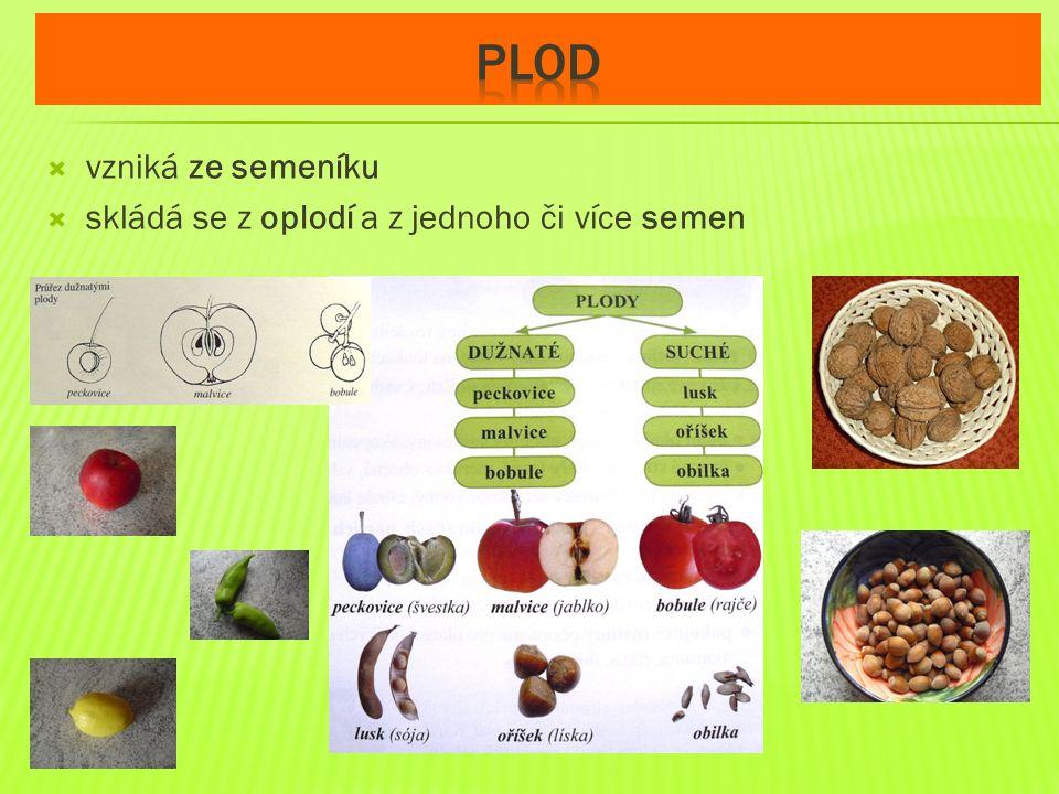 plod vzniká ze semeníku skládá se z oplodí a z jednoho či více semen