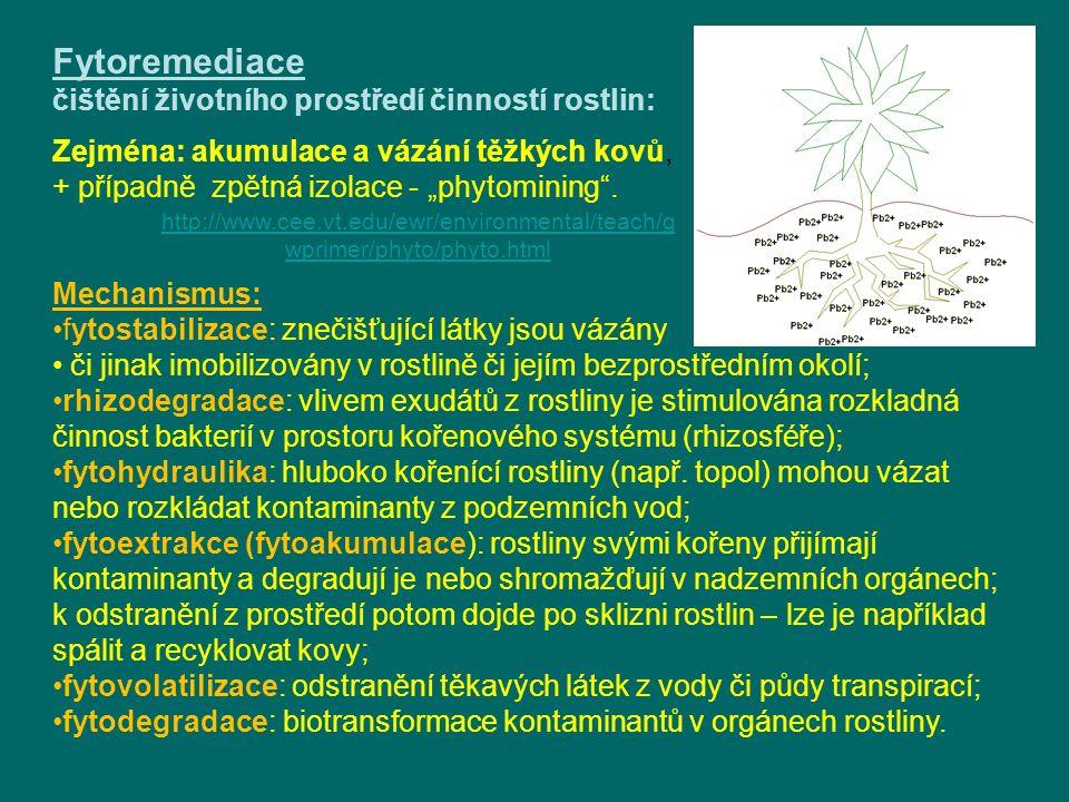 Fytoremediace čištění životního prostředí činností rostlin: