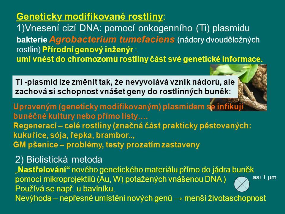 Geneticky modifikované rostliny: