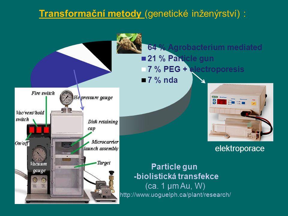 -biolistická transfekce