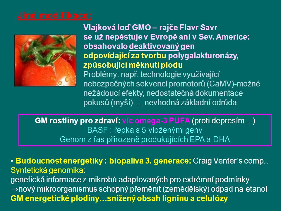 Jiné modifikace: Vlajková loď GMO – rajče Flavr Savr
