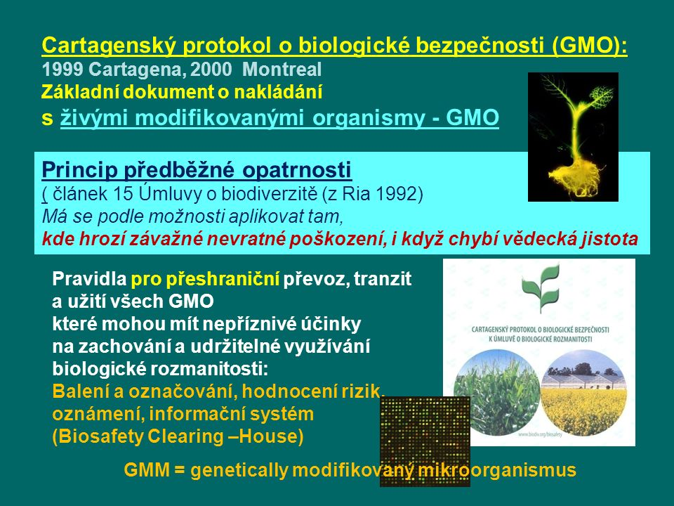 GMM = genetically modifikovaný mikroorganismus
