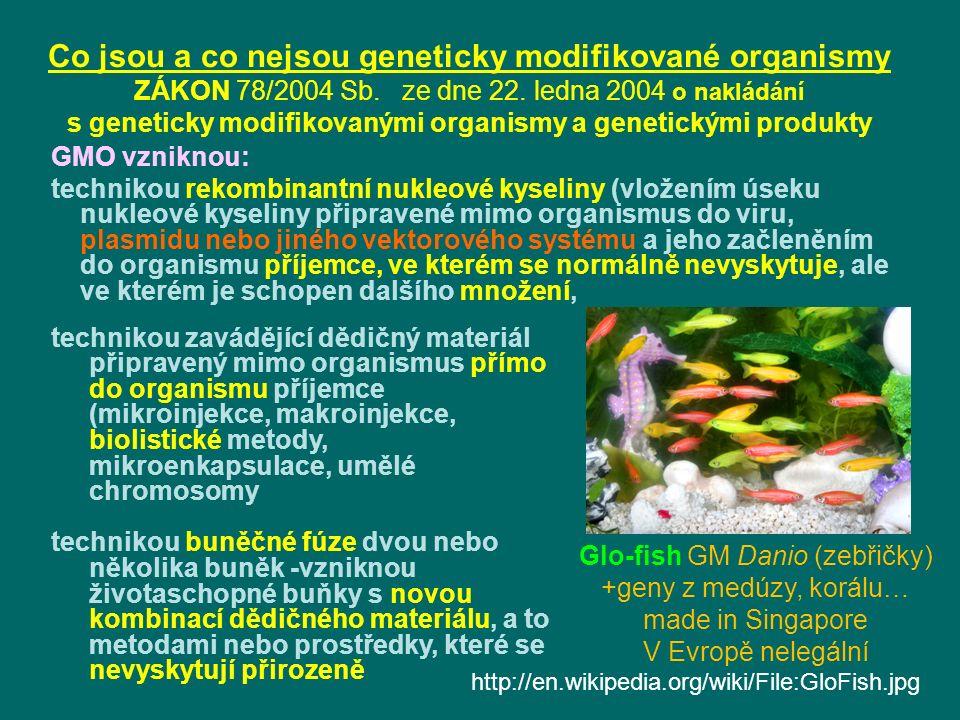 Glo-fish GM Danio (zebřičky)