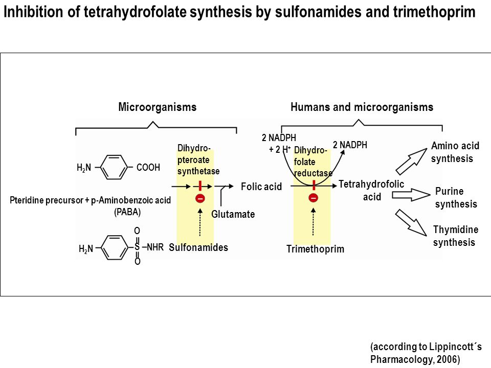 Inhibition of tetrahydrofolate synthesis by sulfonamides and trimethoprim