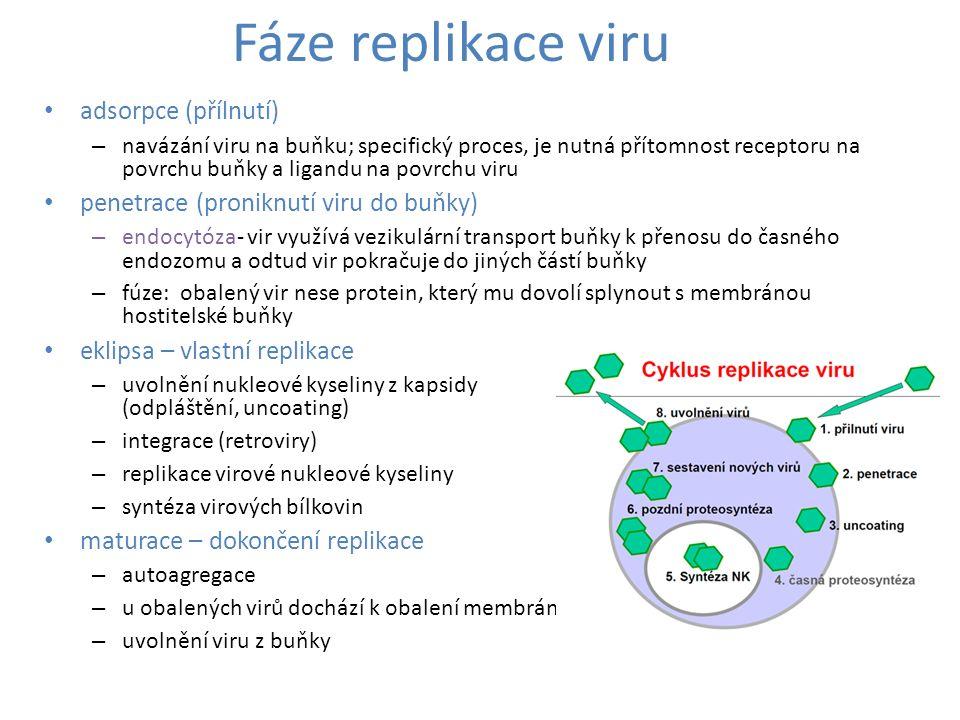 Fáze replikace viru adsorpce (přílnutí)