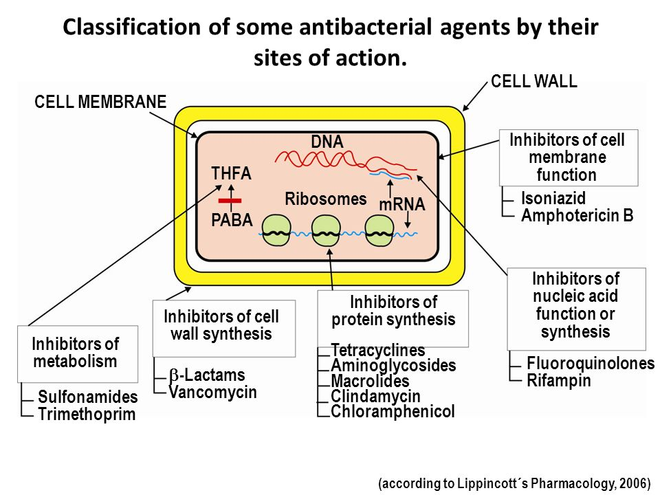 Classification of some antibacterial agents by their sites of action.