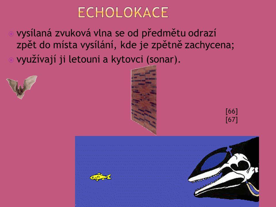 echolokace vysílaná zvuková vlna se od předmětu odrazí zpět do místa vysílání, kde je zpětně zachycena;