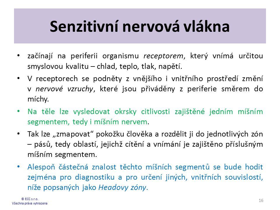 Senzitivní nervová vlákna