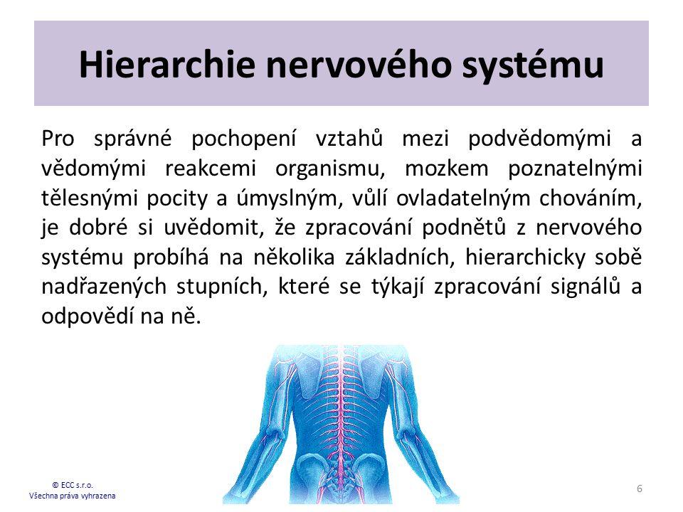Hierarchie nervového systému