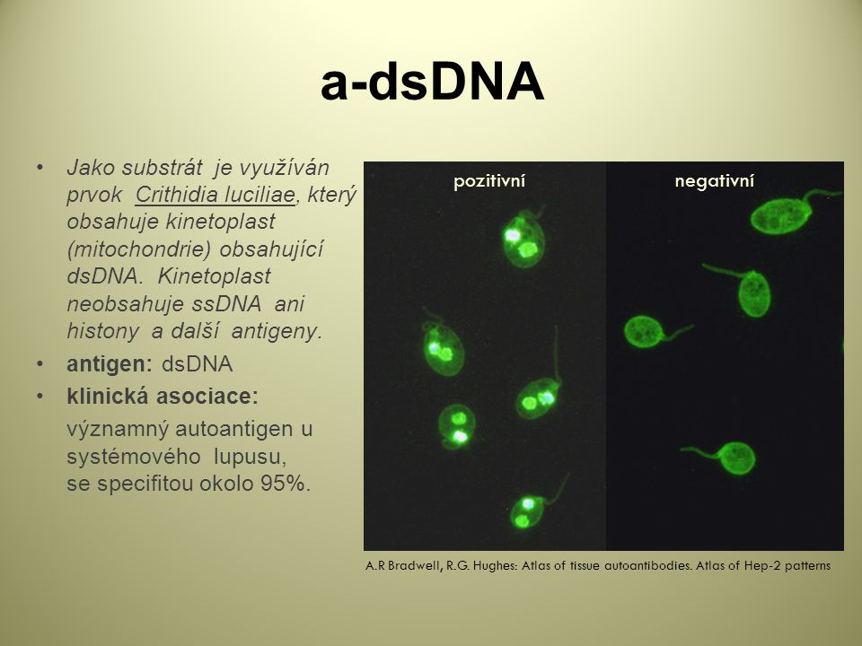a-dsDNA
