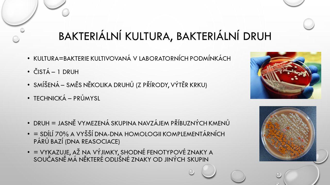 Bakteriální kultura, bakteriální druh