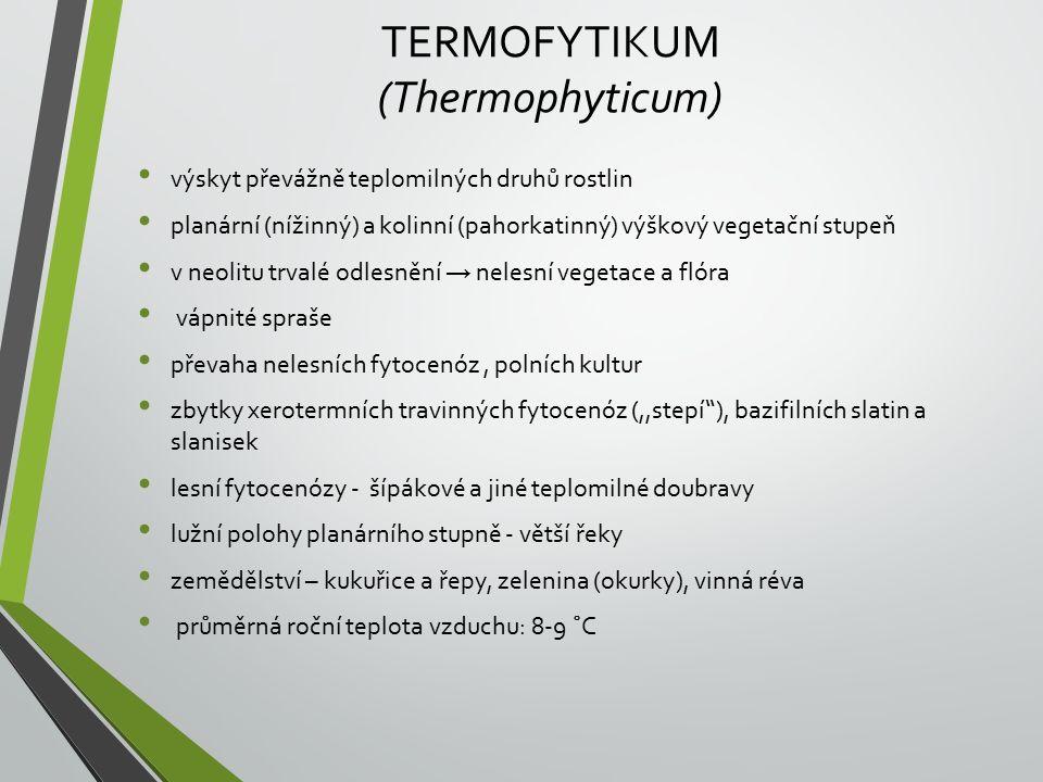 TERMOFYTIKUM (Thermophyticum)
