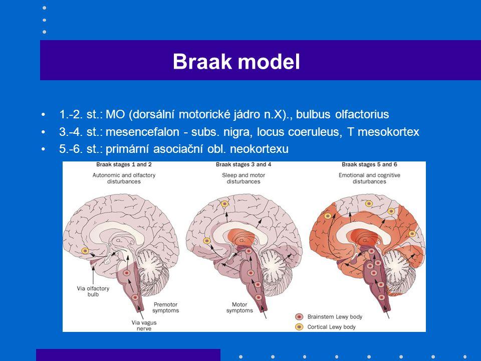 Braak model 1.-2. st.: MO (dorsální motorické jádro n.X)., bulbus olfactorius. 3.-4. st.: mesencefalon - subs. nigra, locus coeruleus, T mesokortex.