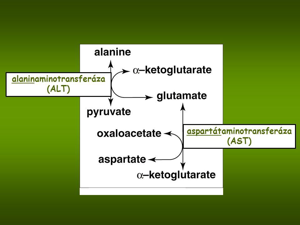 alaninaminotransferáza (ALT) aspartátaminotransferáza (AST)