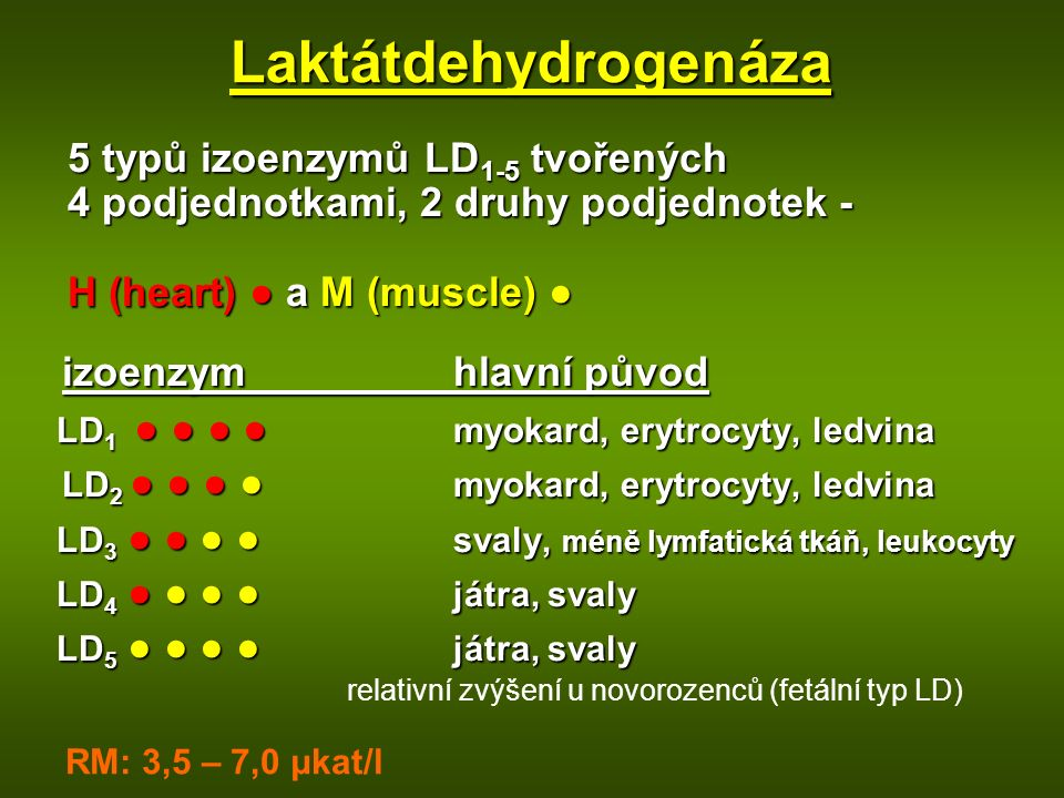 Laktátdehydrogenáza
