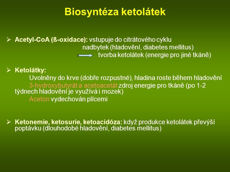 Biosyntéza ketolátek Acetyl-CoA (ß-oxidace): vstupuje do citrátového cyklu. nadbytek (hladovění, diabetes mellitus)