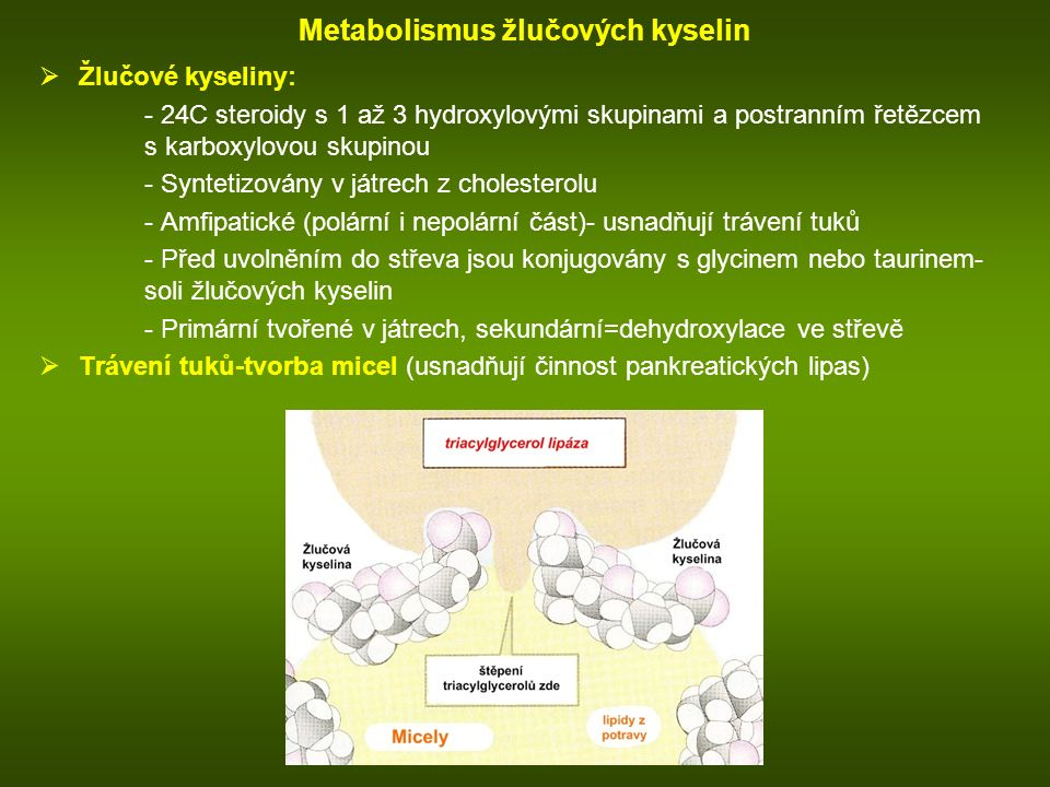 Metabolismus žlučových kyselin